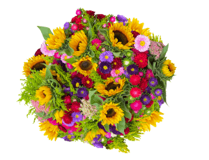 blommor-polen-sverige