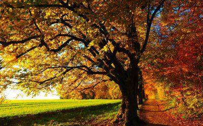 Den gyllene polska hösten