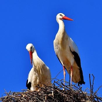 polska-storkar