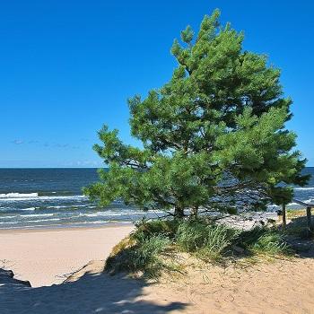 kusten i Polen